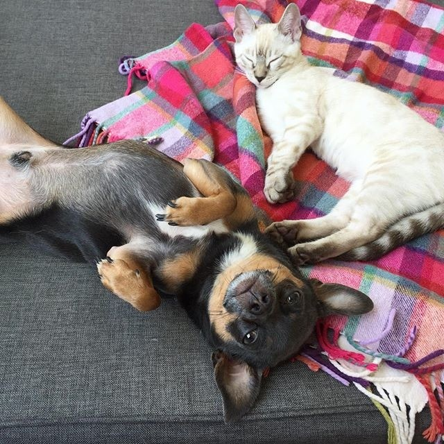 Picture of cause fund 'Doges and Kittehs'